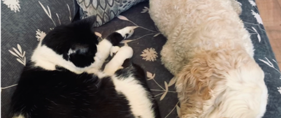 Making the most of things… by Sydney and Marmite… cats that tolerate Ollie the therapy dog